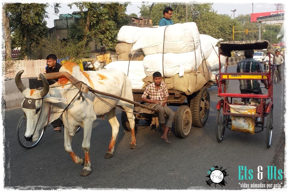 Calles de Delhi, India